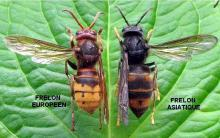 Quel avenir pour nos abeilles (Voir la vidéo d'une naissance)