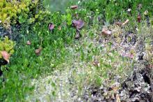 Désastre dans le jardin (Nature - environnement)